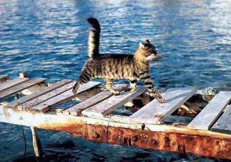 cat-king